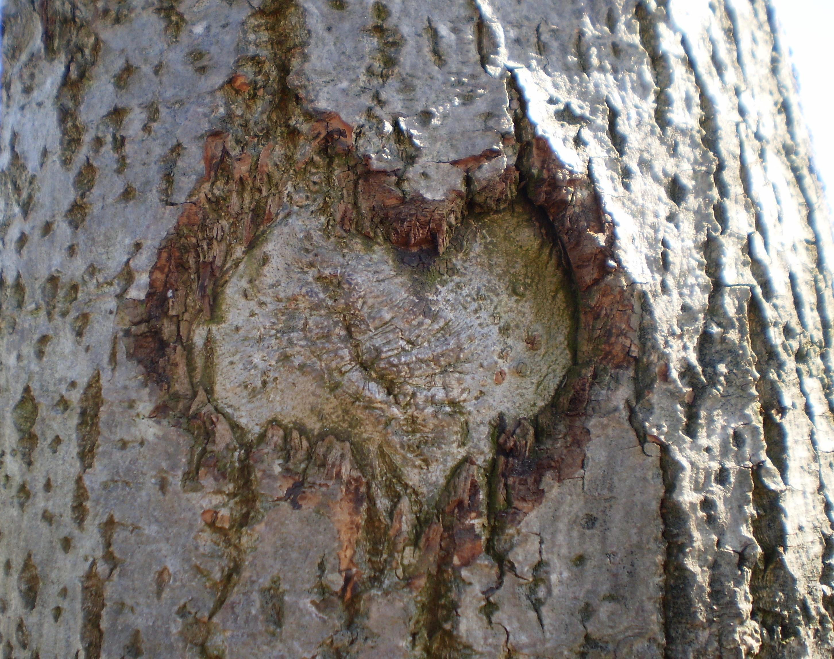 Træhjerte (1)