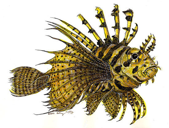 Lionfish - SOLD