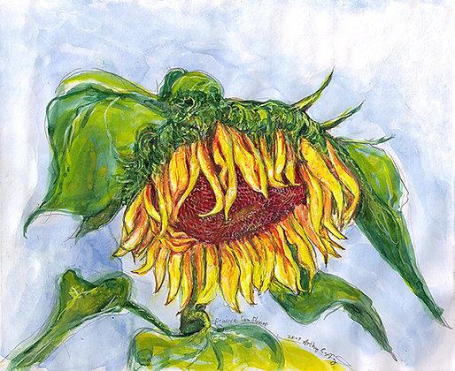 Pensive Sunflower in Blue
