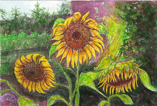 Three Siberian Sunflowers