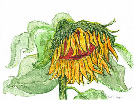 Pensive Sunflower - SOLD