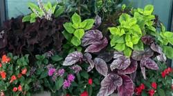 צמחיה גינת גג|  לוטם צמחיה