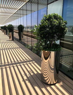 כדים בגינת גג | לוטם צמחיה