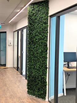 קיר ירוק למשרד