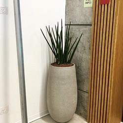 כד עם צמחיה למשרד