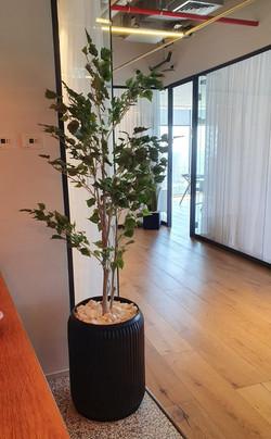 לוטם צמחיה מלאכותית למשרד