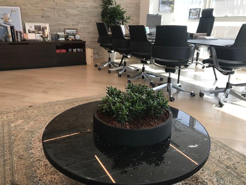 צמחיה טבעית עמידה במשרד
