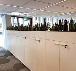 צמחיה למשרדים בארונות - לוטםjpg