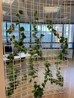 צמחיה מלאכותית על רשת