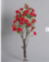 ורד אדום לוטם צמחיה.PNG