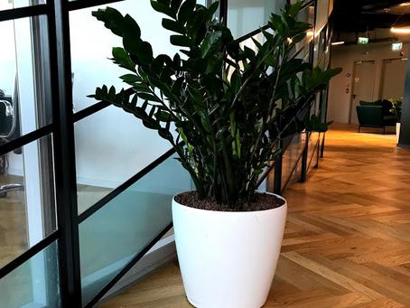 איך לבחור צמחיה למשרד?