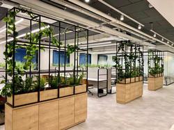 צמחיה למשרדים - לוטם צמחיה