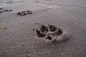 footprint-946189.jpg