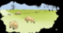 フィールド内の水彩羊