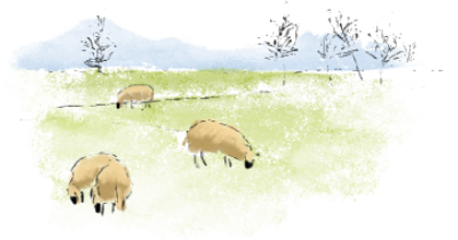 Watercolor sheep in field