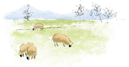 ovejas acuarela en el campo