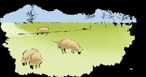 Watercolor sheep in field