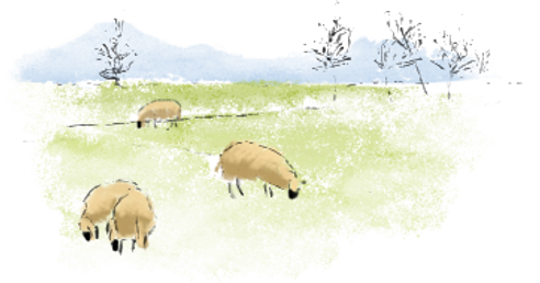 moutons médiation animale dans le champ/ pré