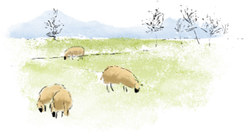 moutons Aquarelle dans le champ