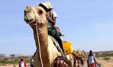 camel_edited_edited.jpg