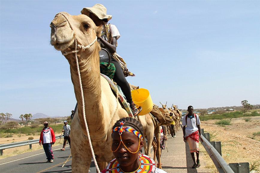 camel_edited.jpg