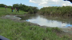 Manguo swamp