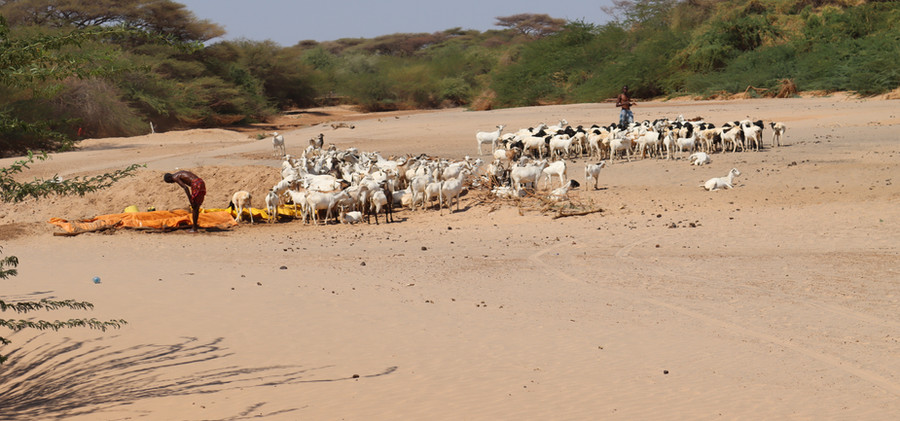Pastoralists digging into the dry River to get water at Merti