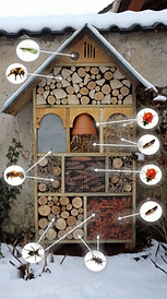 bug hotel.png
