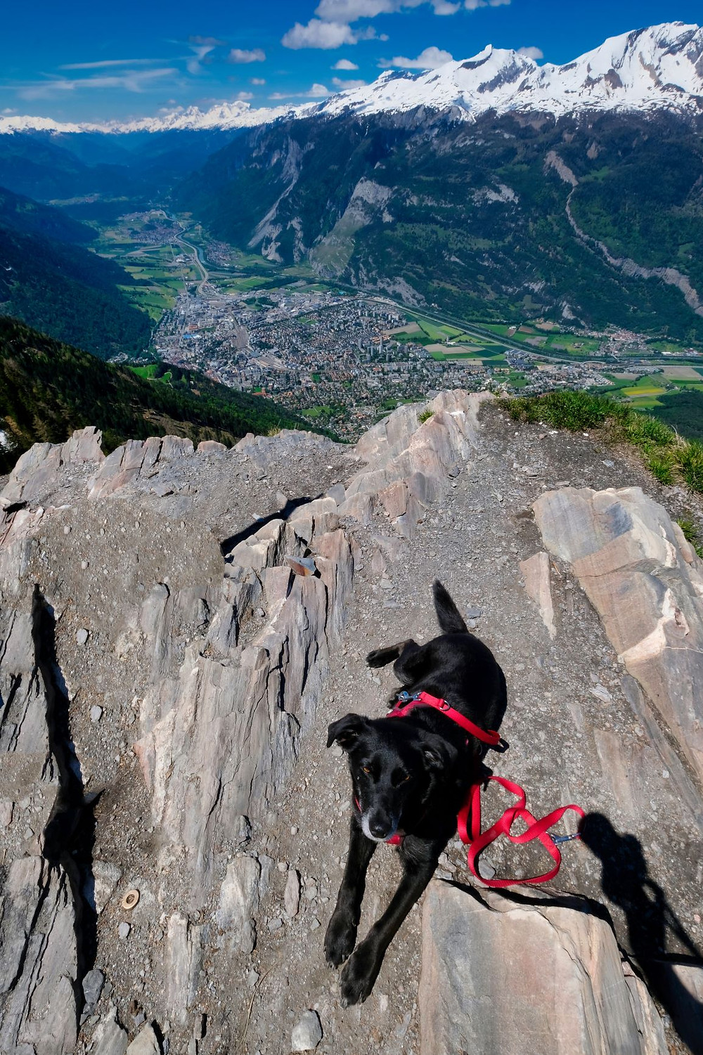 Dogs and mountains make me happy.