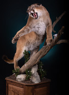 Mountain Lion Pedestal