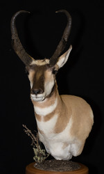 Antelope Table Pedestal
