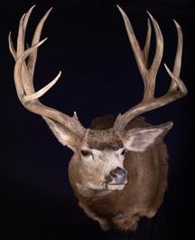 Mule Deer Full Sneak