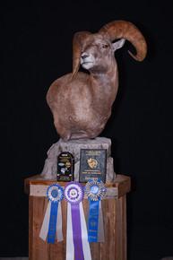 Big Horn Sheep Pedestal