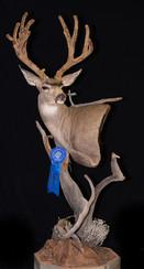 Velvet Mule Deer Pedestal