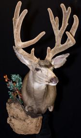 Velvet Mule Deer