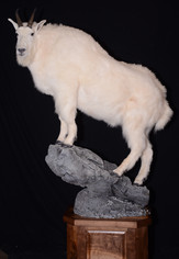 Mountain Goat Pedestal