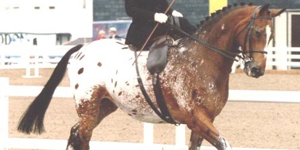 Sue Howard Side Saddle