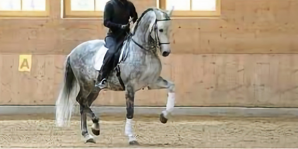 Have a go Working Equitation