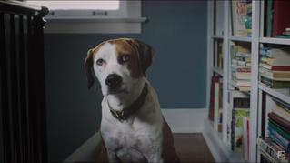 Sundance 2017 Trailer of the Day: 'Downward Dog'
