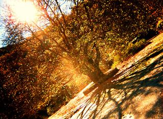 σείριος σαββαΐδης | το δέντρο