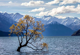 Scenery - tree in a lake surrounded by mountains