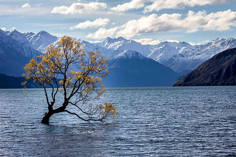 New Zealand scenery. Tree in a lake surrounded by mountains