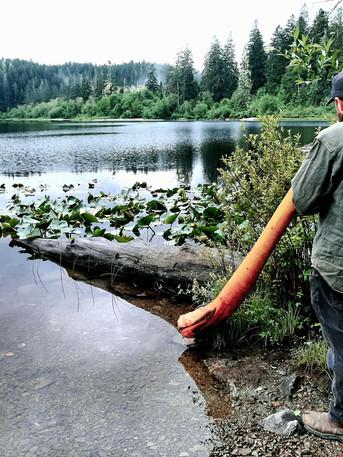 Fairy Lake 2021