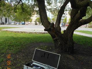 """Деревьям сделали """"УЗИ"""" для определения их """"здоровья"""""""