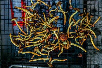 Dahlia x Open Fire-112.jpg