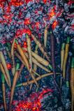 Dahlia x Open Fire-133.jpg