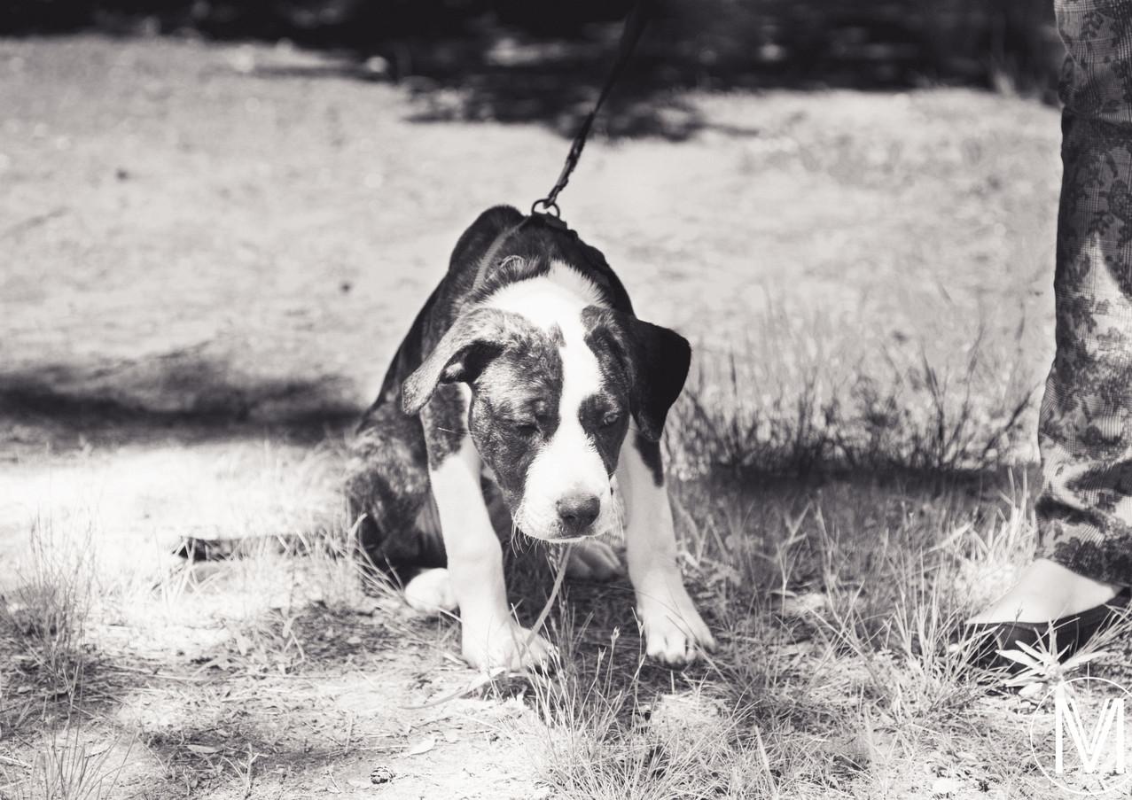 Daisy-8.jpg