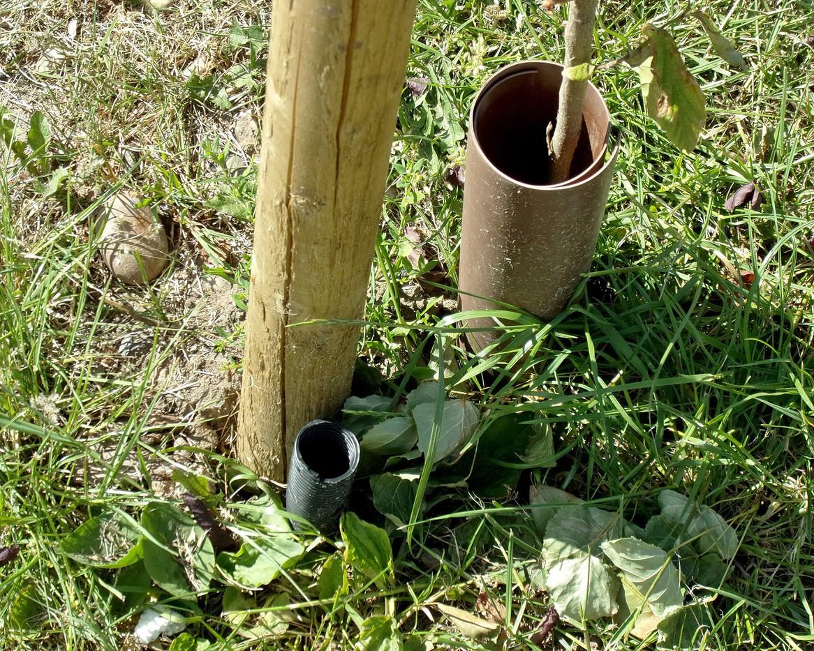 New tree watering pipe