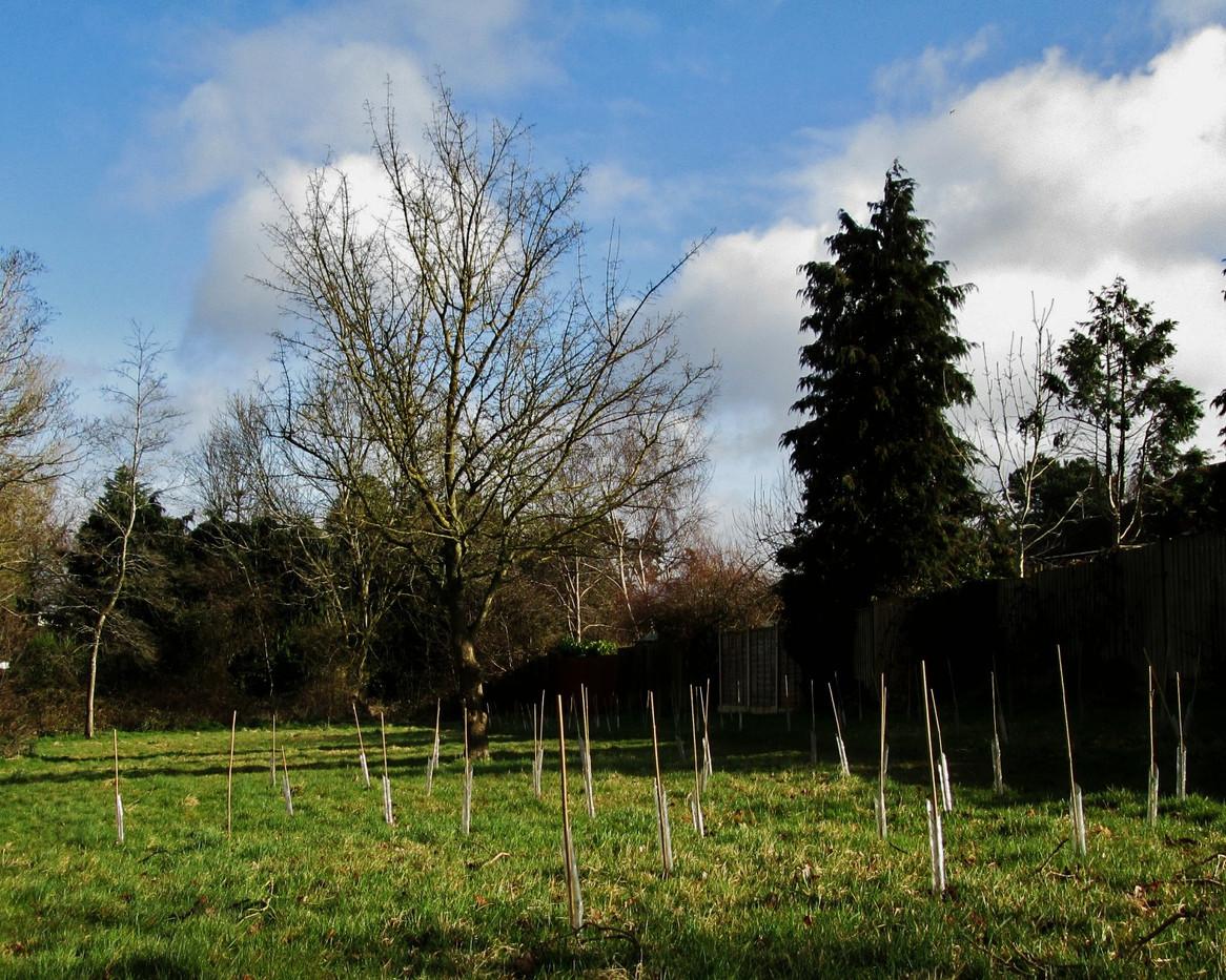 New trees at Richmond Road Park