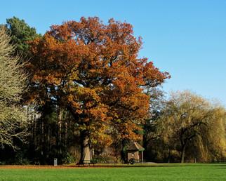 Red Oak Brueton Park